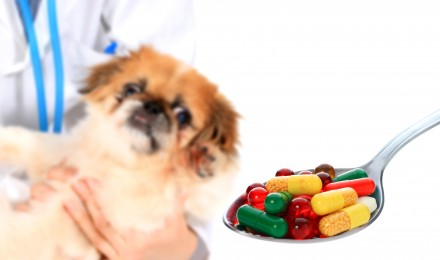 The Exploding Costs of Pet Healthcare